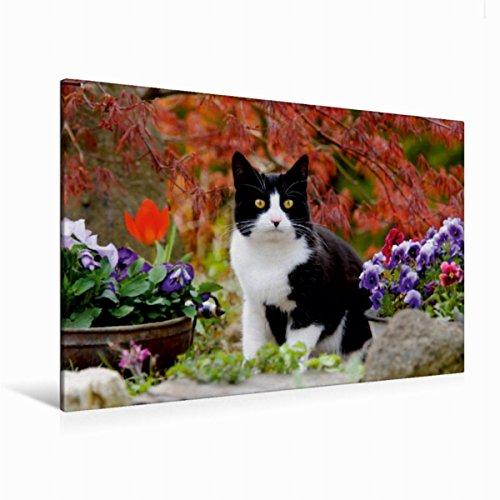 Premium - Lienzo textil (120 cm x 80 cm, horizontal, diseño de gato blanco y negro en el jardín floreciente), color blanco y negro Arce con hojas rojas (CALVENDO Animales) Animales Calvido