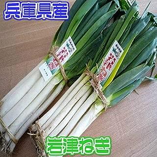 【兵庫県産】岩津ねぎ 大きさおまかせ 約1.5kg 5束入り