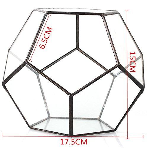 Transparentes fünfeckiges Dodekaeder Glas, Terrarium, auch für Sukkulenten , farblos, Schwarz - 7