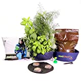 Seedsheet, Grow Your Own Mini Herbs Kit, Container Garden, Organic Seed Pods, Sweet Basil, Cilantro, and Dill, As Seen on Shark Tank