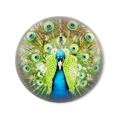 Bits and Pieces -Peacock Glass Paperweight - Heavy Weighted Art Glass Paperweight - Home Office Desk Accessory