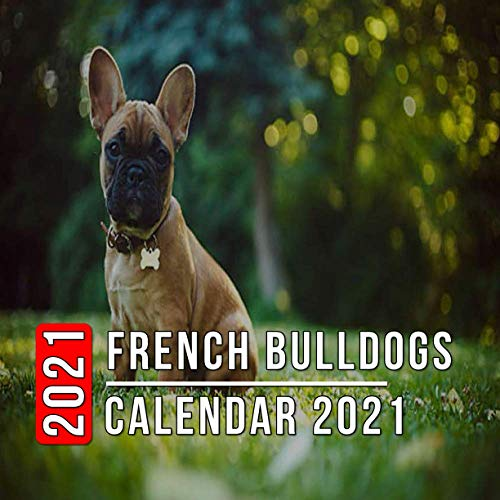 French Bulldogs Calendar 2021: 12-month mini Calendar from Jan 2021 to Dec 2021, Cute Gift Idea For French Bulldogs Lovers Or Owners Men And Women | Pictures in Every Month
