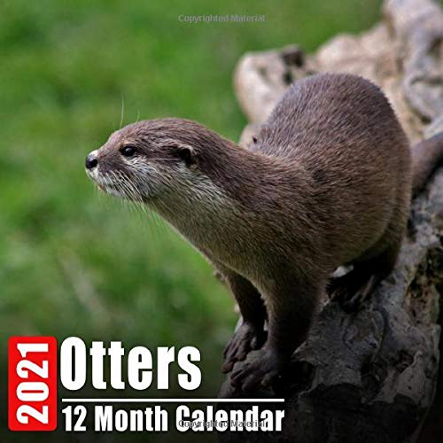 Calendar 2021 Otters: Cute Otter Photos Monthly Mini Calendar With Inspirational Quotes each Month