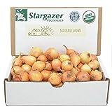 Stargazer Perennials Yellow Stuttgarter Onion Sets 8 oz   Organic Non-GMO Bulbs - Easy to Grow…
