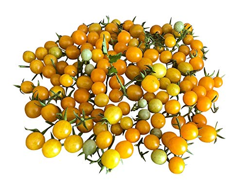 Tomate - Gold Rush Currant - 10 graines