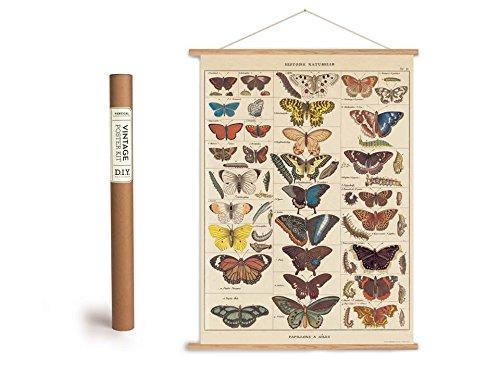 Cavallini Vintage Poster Set mit Holzleisten (Rahmen) und Schnur zum Aufhängen, Motiv Schmetterlinge