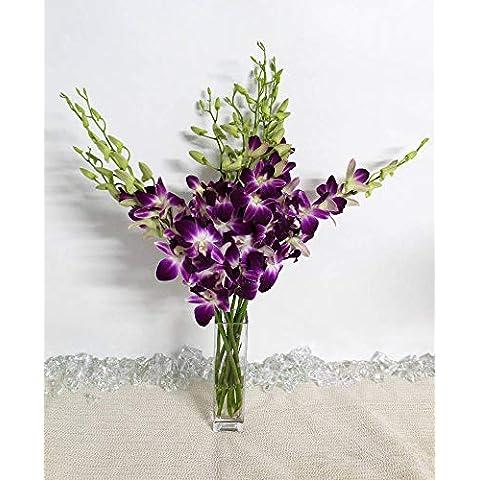 Save on Athena's Garden Fresh Vibrant Purple Dendrobium - Sale: $58.49 USD