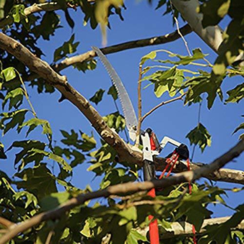 Corona TP 4210 DualLink Tree Saw and Pruner, 10 Feet