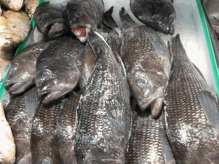 Virginia Beach Black Sea Bass 6 Lb. Avg (5-6 Fish) (Head On)
