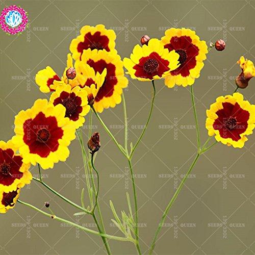 11.11 Big Promotion! 100 pcs/lot rares graines hyménoptères colorées graine de bonsaïs fleur arbre chinois jardin et la maison plante herbe organique 1