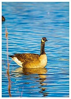 Canadian Goose Photography Fine Art Birthday Greeting Card by Will Davis Studios Inside Reads   Happy Birthday!