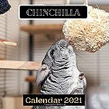 Chinchilla Calendar 2021