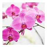Fototapete Orchidee - Nahaufnahme Orchidee Premium Quadrat 288 x 288cm