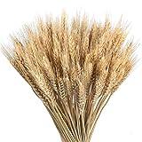 Dadahuam Weizen, Natürliche Weizen Deko Trockenblumen 100pcs Große Weizen-getrocknete Blumen-Gartenpflanzen-natürliche Primärfarben-realer Weizen Für Hochzeitsdekorationen - 4