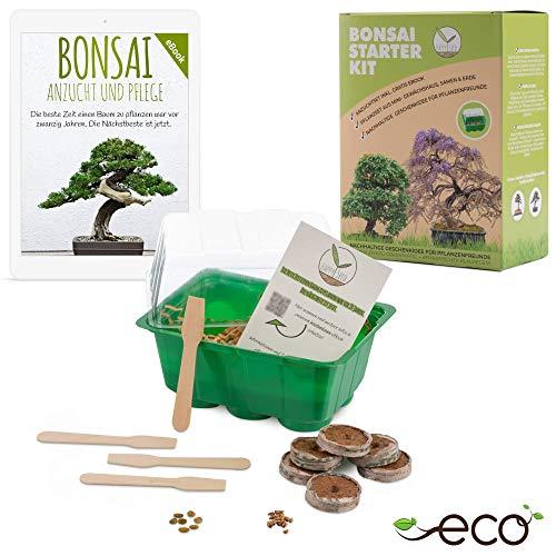 Bonsai Starter Kit vermeerderingsset incl. GRATIS eBook - plantenset van minibroeikas, zaden & grond - duurzaam cadeau-idee voor plantenliefhebbers (Zaden: Afrikaanse blauwe regen + dwerggranaatappel)