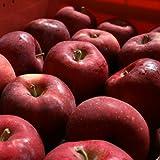 訳あり 紅玉(こうぎょく) Cランク(家庭用) 10kg箱入り (約8kg 36玉~46玉) 長野県産りんご