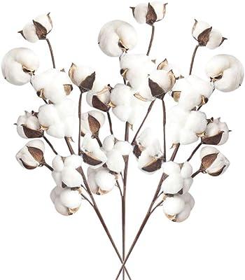 FiedFikt Tallos de algodón Natural Secos para Granja, Relleno de Flores Artificiales, Ramas de algodón Natural, simulación de Flores de Porcinis secas Naturales y Tallos de Flores de algodón Granja: Amazon.es: Hogar