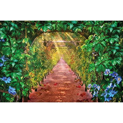 GREAT ART Fotomurale – Vite – Decorazione da Parete Vino l'UVA Pergola Viale Giardino d'Autunno Spalliera Via Natura Parco Foglie di Vigneto Viticci Carta da Parati 210 x 140 cm