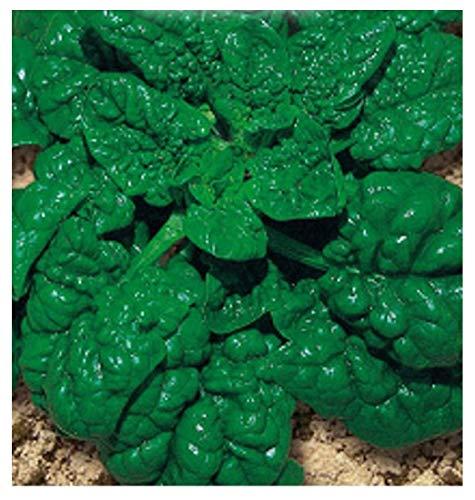 400 c.ca gigantische egel spinazie zaden amerika - spinacea oleracea in originele verpakking gemaakt in italië - gigantische spinazie
