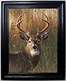 Those Flipping Pictures STAG 3D Framed Wall Art-Lenticular Technology Causes The Artwork to Have Depth and Move-Hologram Style Images-Holographic Optical Illusions