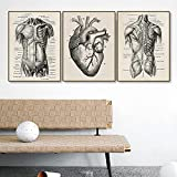 SNGTOW Nordic Retro Medicine Diagrama de anatomía musculoesquelética Humana Póster de Arte de Pared Impresión Decoración del hogar Decoración de Farmacia de Hospital   40x60cmx3 Sin Marco