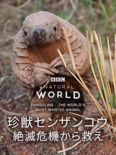 珍獣センザンコウ 絶滅危機から救え(字幕版)