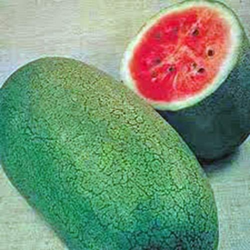 SANHOC Samen-Paket: Country Creek Acres Wassermelone, Charleston Gray, Erbstück, Bio-Samen, Groß Super Sweet