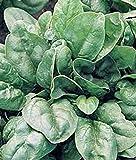 HONIC Samen-Paket: Spinat-Samen, Nobel, Erbschaft, Organisch, Nicht ohne Gentechnik, 20+ Samt, Salat Spinat