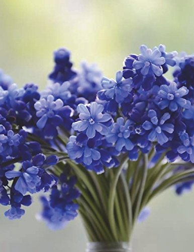 Florist Floristry Flower Bouquet Blue Lavender Flowers Bloom Vase Muscari Bulb: Notebook Journal Diary Composition Book Large Size 150 Ruled Pages for School, Office or Home Softcover Great Gift