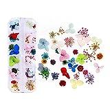 KXLBHJXB Mischen Sie Farben Getrocknete Blume for Nagel-Kunst-Dekorationen mischten natürliche Nagel Blumen Trockene Blumen-Verzierungen Maniküre Zubehör Getrocknete Blumen (Color : 9)