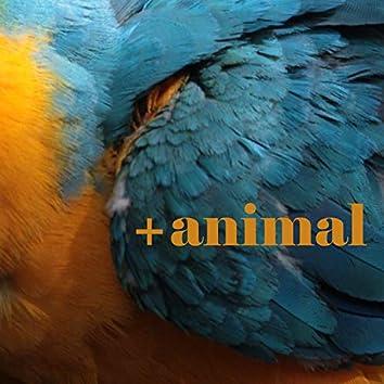 + Animal