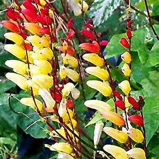 Best firecracker vine seeds Reviews