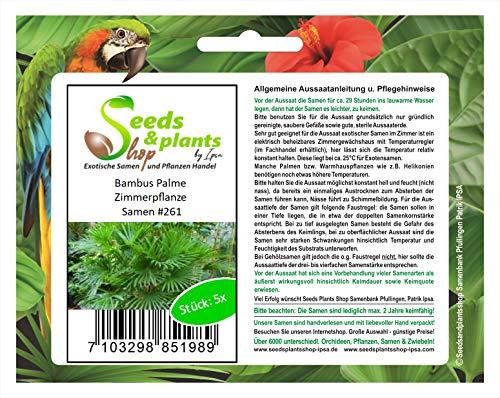 Stk - 5x Bambus Palme Zimmerbambus Pflanzen - Samen #261 - Seeds Plants Shop Samenbank Pfullingen Patrik Ipsa