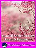 Stunning Cherry Blossom Sakura &...