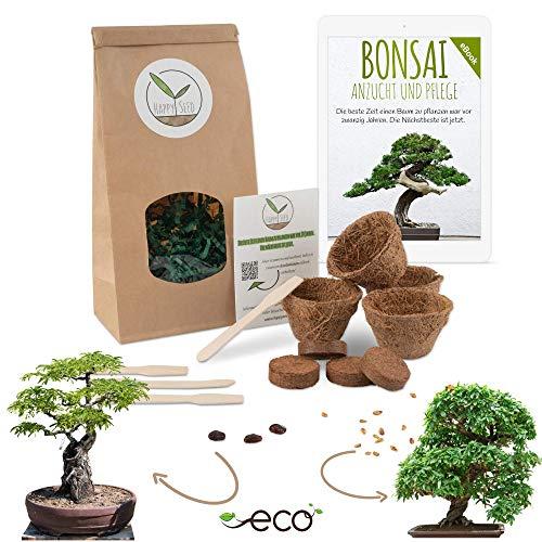 Bonsai Starter Kit vermeerderingsset incl. GRATIS eBook - plantenset van kokosnootpotten, zaden & grond - duurzaam cadeau-idee voor plantenliefhebbers (Dwerggranaatappel + Tamarinde)