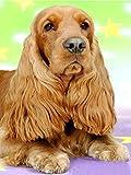 YHZSML DIY 5D Kit De Pintura Diamante British Cocker Spaniel Mascota Cachorro De Perro Imágenes De Bordado De Punto De Cruz para Decoración De La Pared del Hogar Diamante Cuadrado Sin Marco 35X45Cm