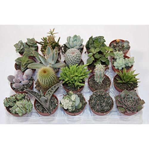 Comprar plantas crasas