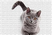 LHJOY 大人のためのジグソーパズル500クリスマス猫の目灰色の動物を見て子供たちの誕生日プレゼントとホリデーギフト 52x38cm