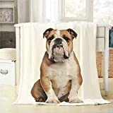Mugod Throw Blanket English Bulldog 5 Years Old Sitting Against White Background Decorative Soft Warm Cozy Flannel Plush Throws Blankets for Bedding Sofa Couch 60 X 80 Inch