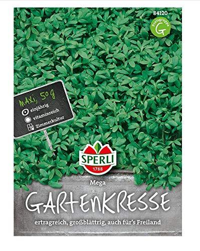 Gartenkresse, Mega Maxi 50 g, eine einjährige vitaminreiche Gewürzpflanze mit einem milden Geschmack
