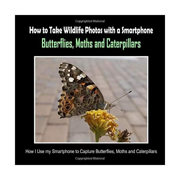 Butterflies, Moths and Caterpillars: How I Use My Smartphone to Capture Butterflies, Moths and Caterpillars (How to Take Wildlife Photos with a Smartphone)