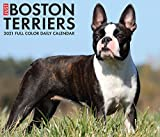 Just Boston Terriers 2021 Box Calendar (Dog Breed Calendar)