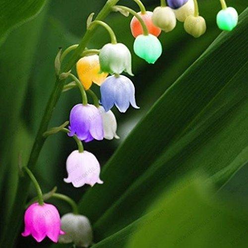 RETS Seeds: freies Schiff Maiglöckchen Samen, glockenOrchideenSamen, Bonsai-Samen, Mehrfarbig Orchideen-40 Samen