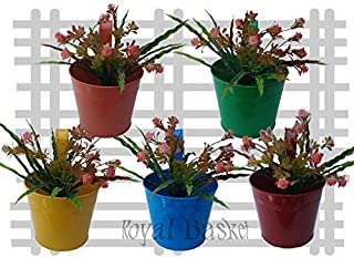 Royal Basket Round Railing Planters for Room and Balcony Decoration (Multicolour, Pack of 5)
