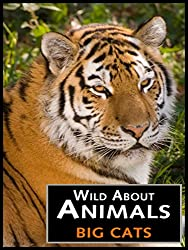 Wild About Animals - Big Cats Video