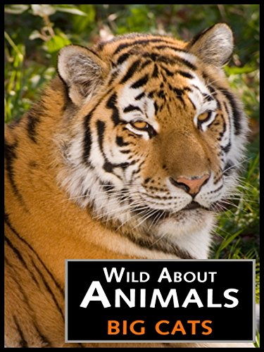 Wild About Animals: Big Cats