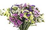 Ramo de Flores Statice Variadas, Flores Naturales a Domicilio Blossom | Flores Frescas y Recién Cortadas a domicilio | Estaticie, Siempreviva, Limonium | Entrega Gratis 24 horas
