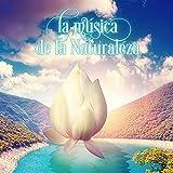 La Música de la Naturaleza - Música New Age para la Relajación, Masaje Shiatsu, Meditar con Sonidos de la Naturaleza, Energía Positiva para Controlar la Ansiedad, Sonidos del Mar para Dormir, Masoterapia