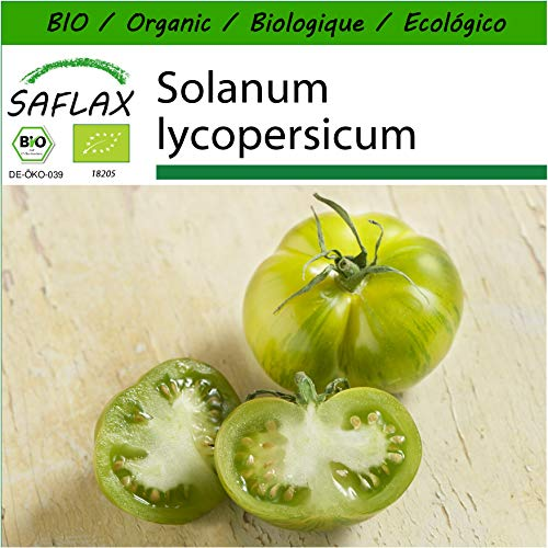 SAFLAX - BIO - Tomate - Green Zebra - 10 Samen - Mit keimfreiem Anzuchtsubstrat - Solanum lycopersicum