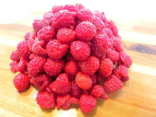 冷凍 ラズベリー 1kg (500g×2P) 無添加 フルーツ ベリー トロピカルマリア ・ラズベリー2P・